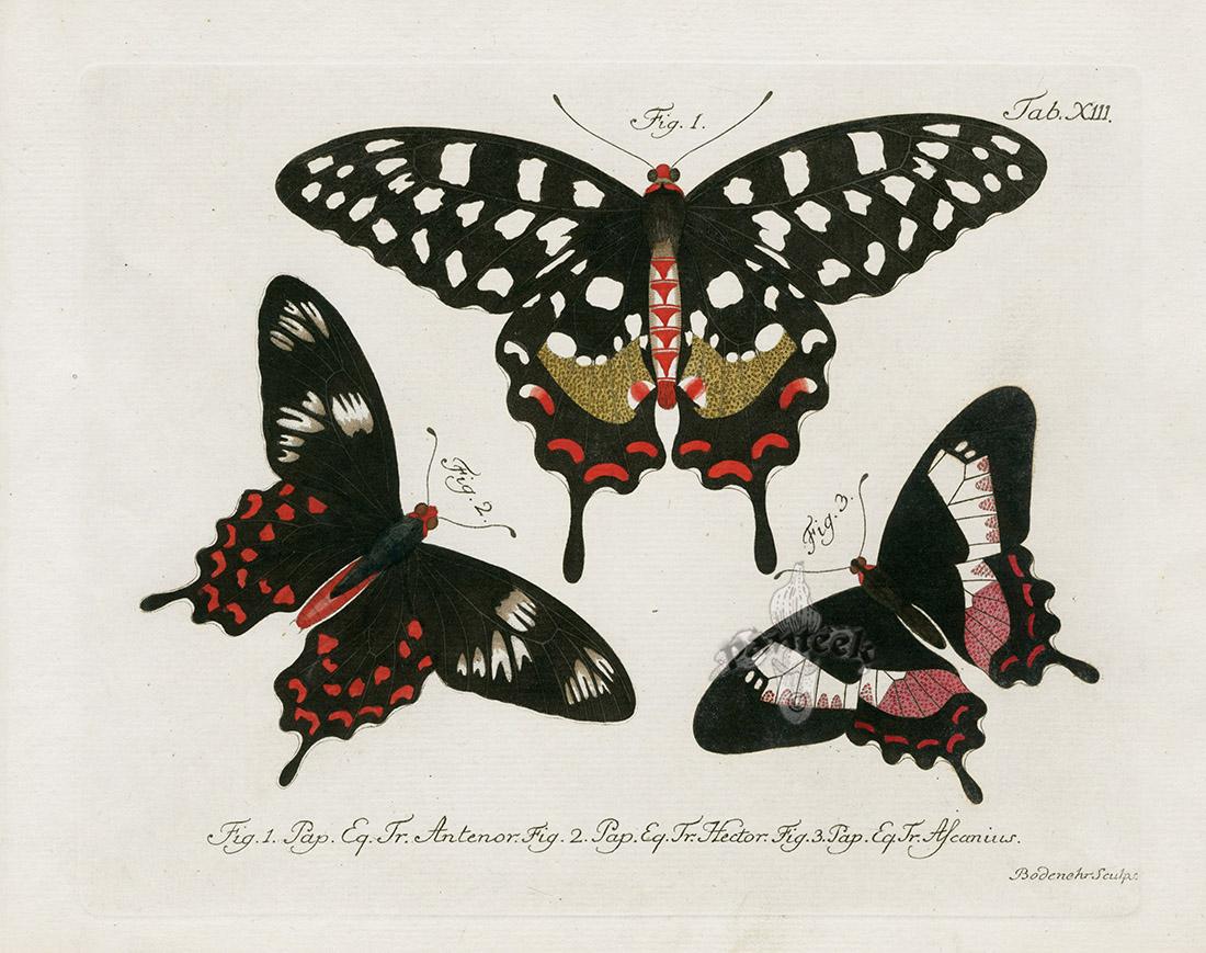Pin on antique animal art prints
